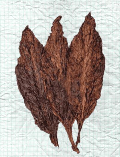dark fired cured leaf