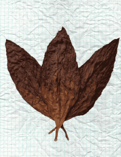 VA Sweet Leaf