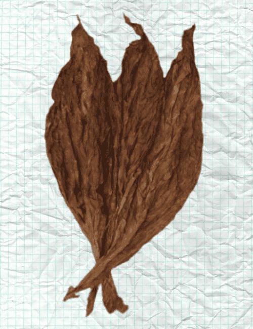 pa wrapper dark smooth leaf