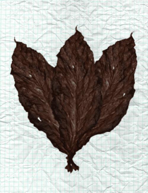 Dark-Fire-Cured-Binder-Leaf-min